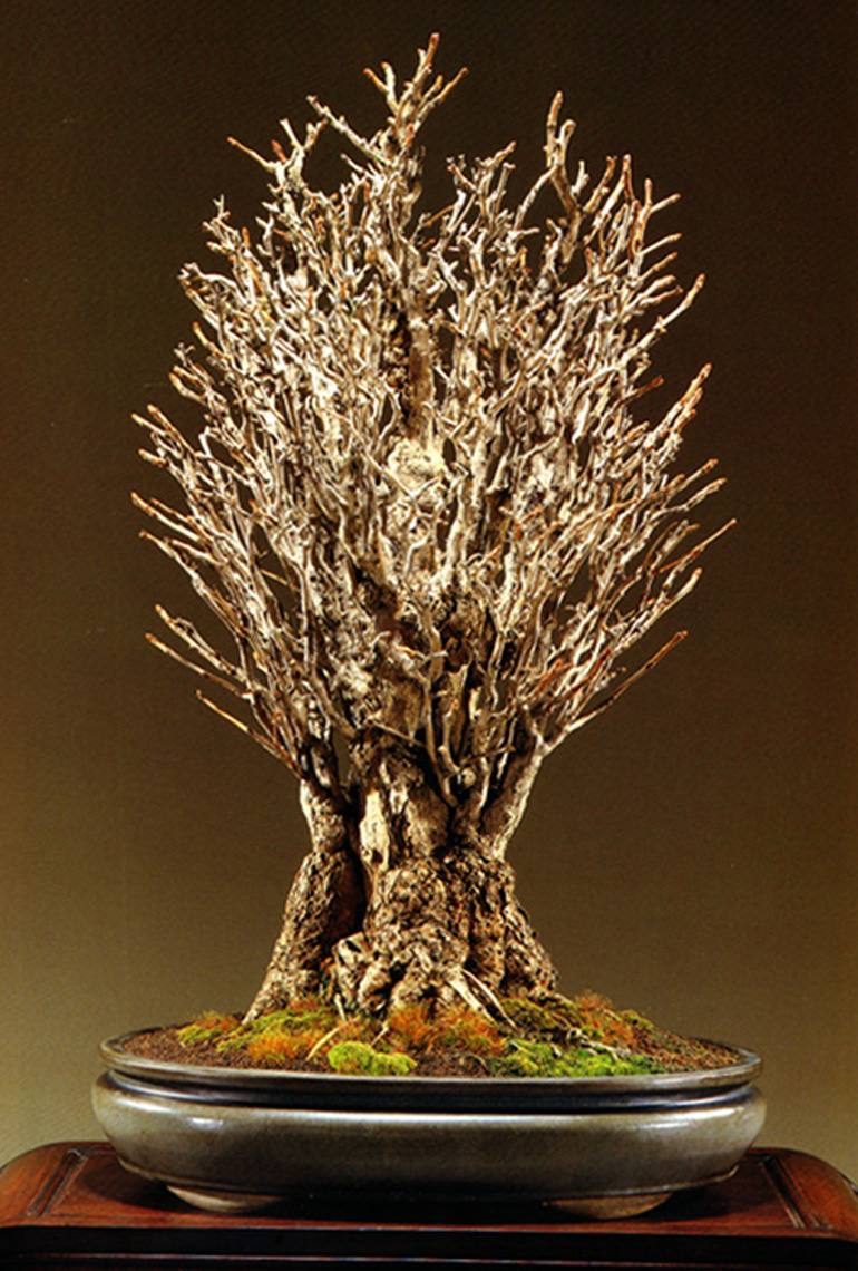 straight up tightly bunched bonsai bark. Black Bedroom Furniture Sets. Home Design Ideas