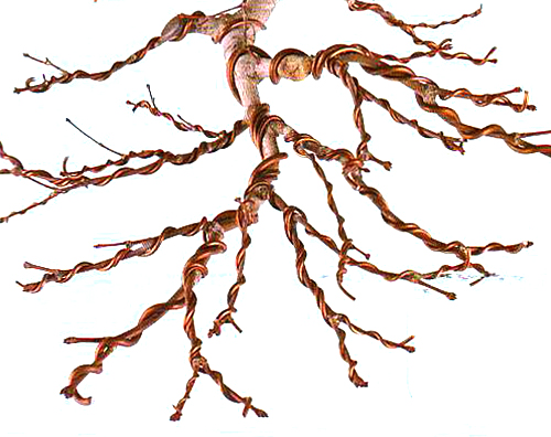 an embarrassing possibility  wiring all the way out to the Bonsai Styles Bonsai Copper Wire