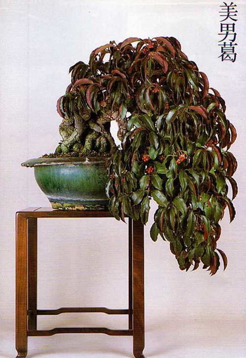 Bonsai Today Magazine #5 Jan/Feb 1990 Part of Large Collection Mint Condition