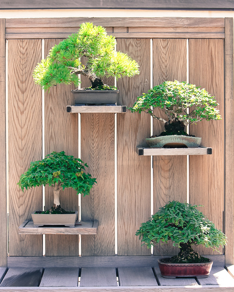 Backyard Bonsai Display : Inspiration for Backyard Bonsai Displays ? #15  Bonsai Bark
