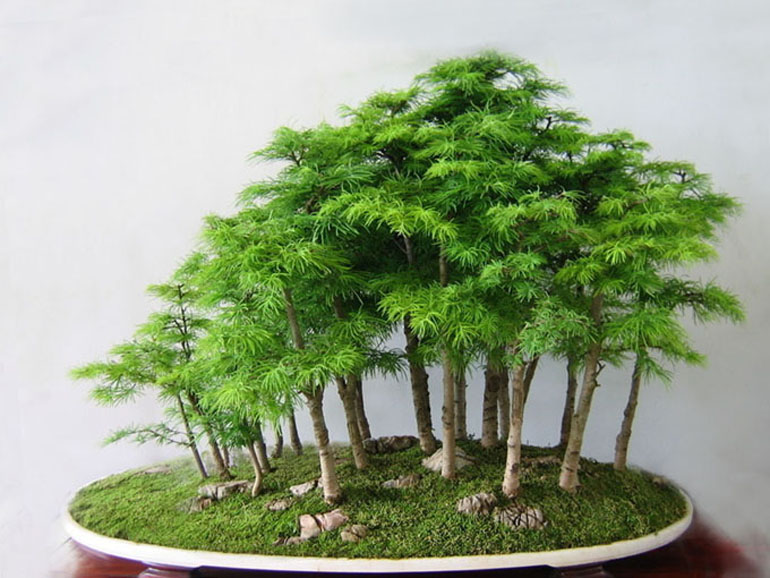 forest bonsai a deeper understanding bonsai bark