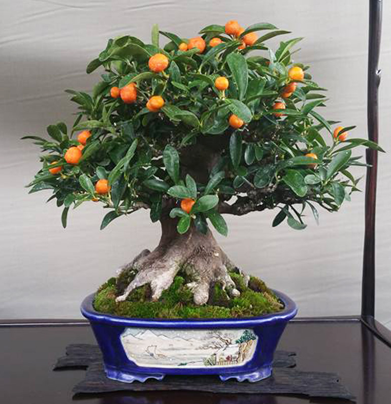 shohin bonsai… copper wire sale endstonight  bonsai bark, Beautiful flower