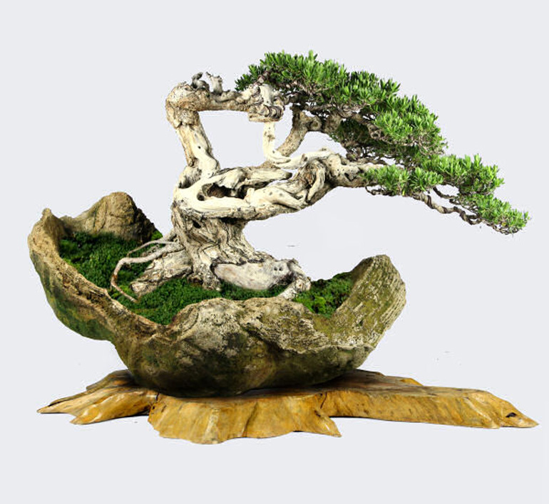 bonsai show HD (4)