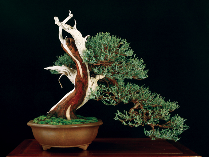 boon3sierra juniper 3 (color corrected)