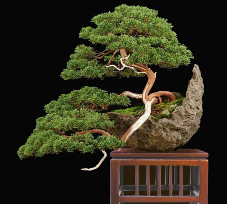 colin s moon pot bonsai bonsai bark. Black Bedroom Furniture Sets. Home Design Ideas