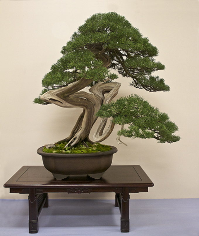 still the best bonsai show bonsai bark