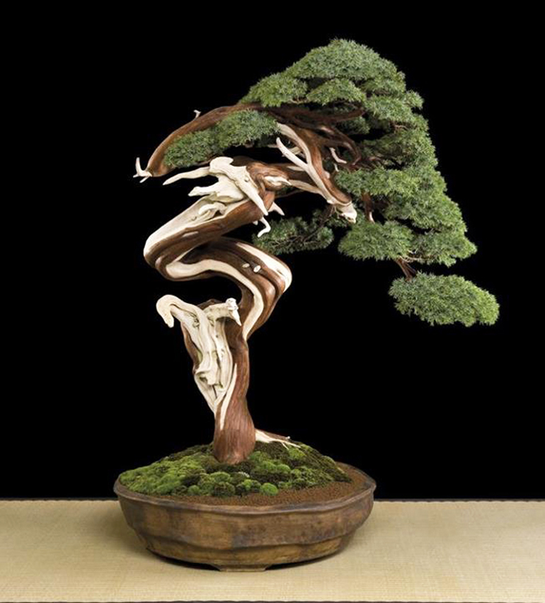 Eccentric bonsai bonsai bark - Decorative trees with red leaves amazing contrasts ...