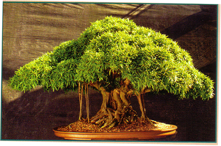 Feed Your Bonsai They Don T Survive On Water Light And