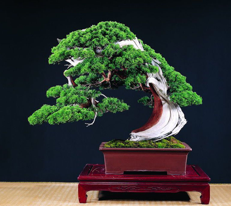 Abstract bonsai art carving deadwood sidiao style