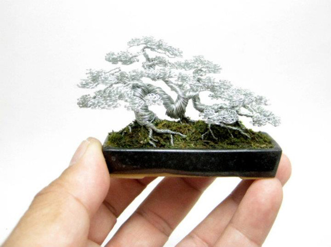 how to grow a bonsai tree from scratch