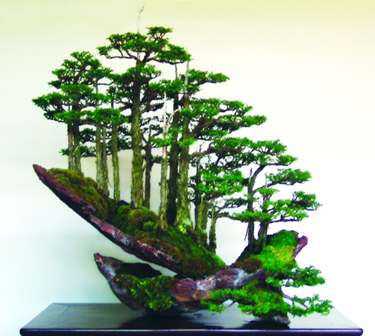 Bonsai Bark Promoting and Expanding the Bonsai Universe Page 38
