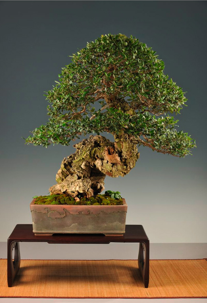 weekly wire bodacious bark bonsai bliss viva brasil