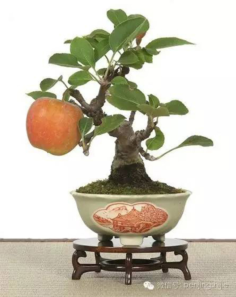 Fruiting Amp Flowering Bonsai Bonsai Bark