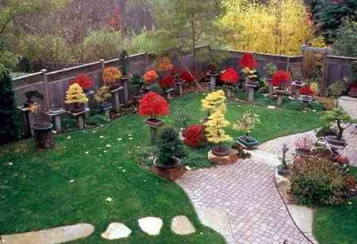 Backyard Bonsai Display : Backyard Bonsai Displays #2 Reiner Goebel  Bonsai Bark