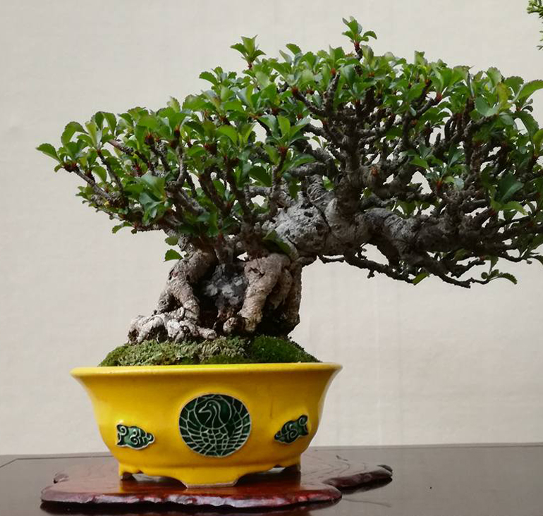 Nice tree spectacular pot other small bonsai wonders for Nice small trees