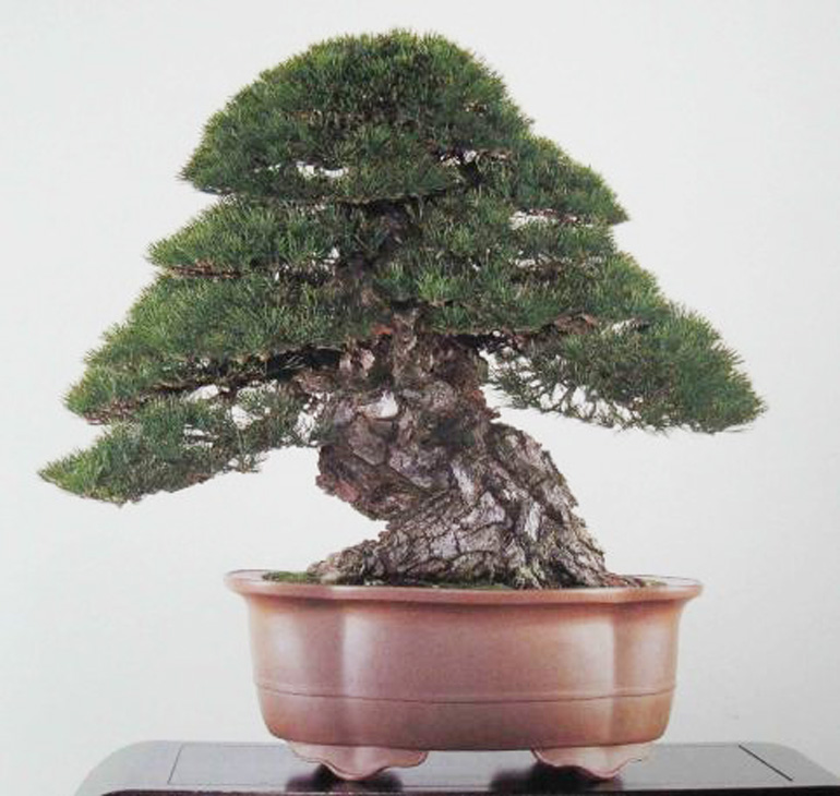 an impressive list of famous bonsai artists bonsai bark