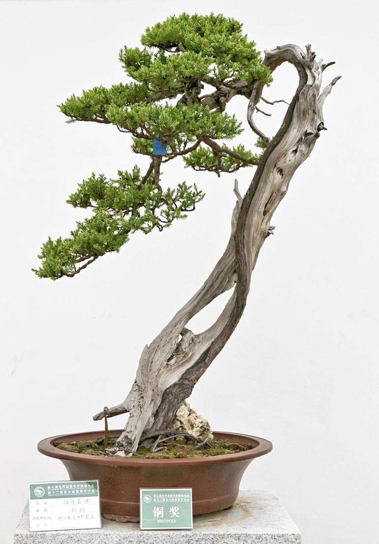 Today is a good day to hug a bonsai or even a local for Literati bonsai gallery