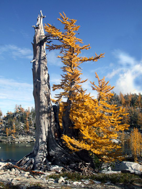 wildlarch
