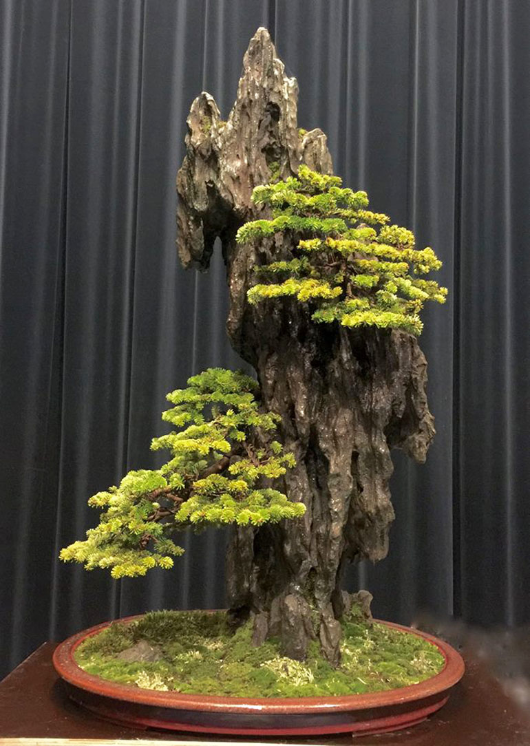 Two Major Bonsai Events A Regal Rock Planting Bonsai Bark