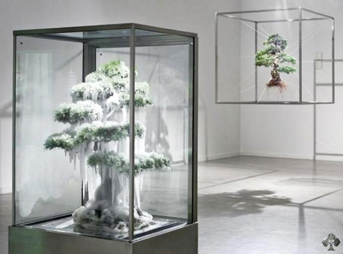 Crazy bonsai bonsai bark for Unusual bonsai creations