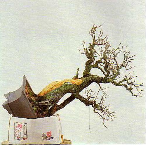 Bonsai Bark Promoting And Expanding The Bonsai Universe Page 246