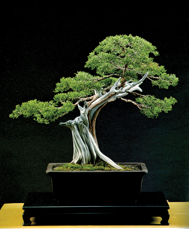 Sensational Bonsai Without Wiring Basic Electronics Wiring Diagram Wiring Digital Resources Funapmognl