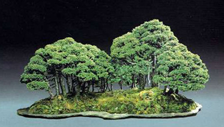 B1KATOcovertrees