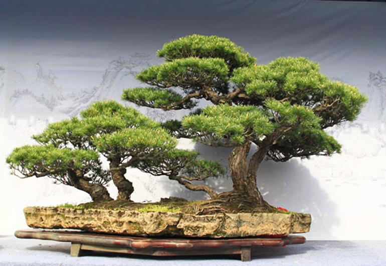 Bonsai Bark Promoting And Expanding The Bonsai Universe Page 126