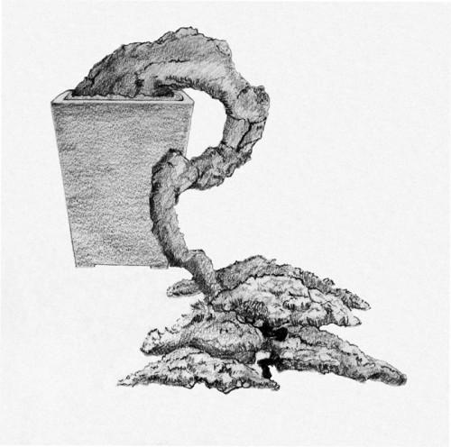 Another bonsai drawing by patrick giacobbe bonsai bark - Dessin bonzai ...