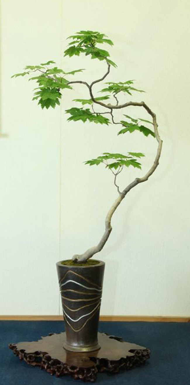 20 thoughts on bunjin bonsai without a doubt the best for Literati bonsai gallery