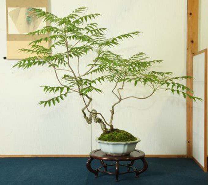 Moving Out Of The Bonsai Mainstream With A Deft And Delicate Touch Bonsai Bark