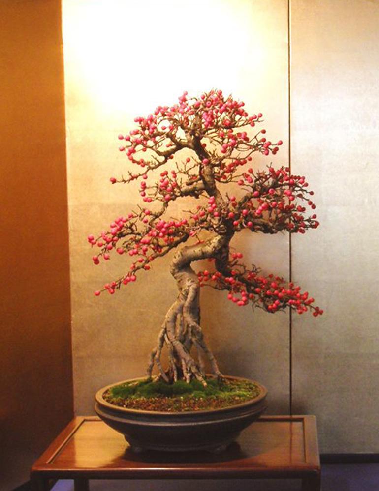 Principles Of Bonsai Design With A Personal Touch Bonsai Bark