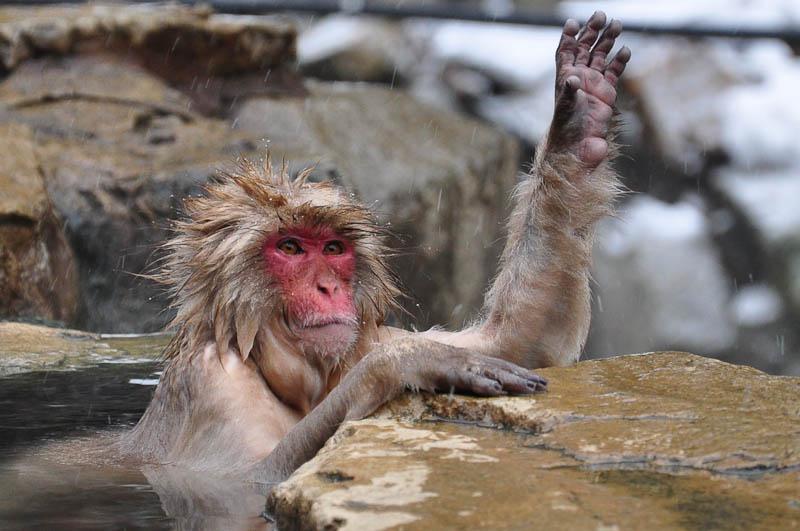 Jigokudani Monkey Park Bonsai Bark