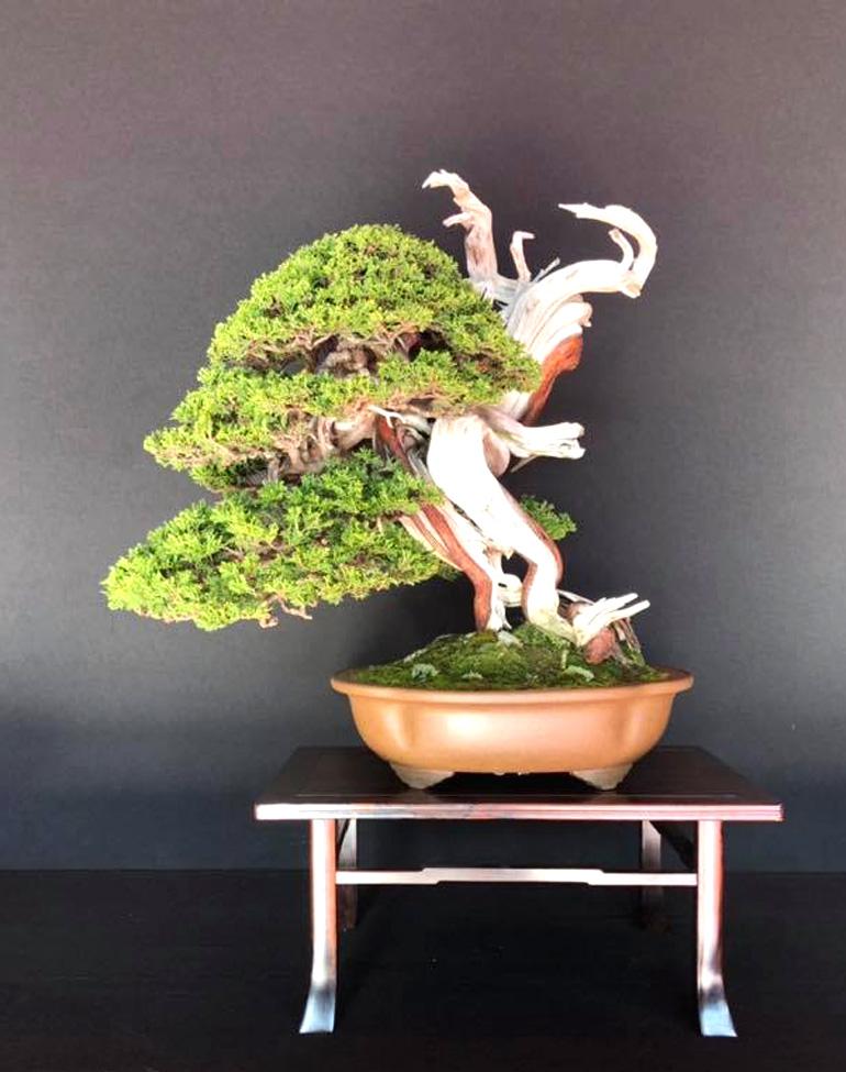 Juniperus sabina. Xavier Massanet