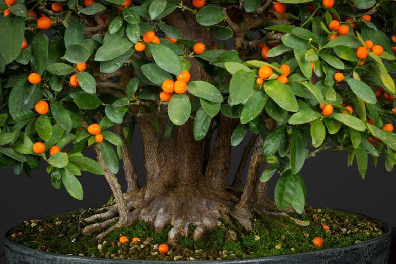 kumquat quotes