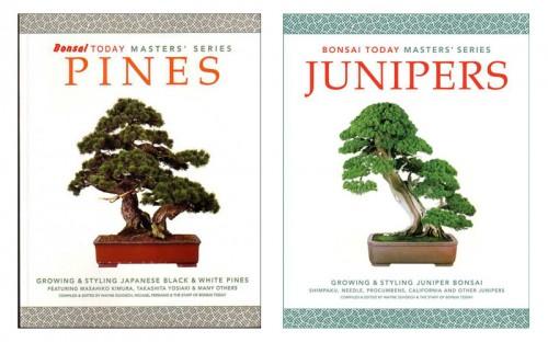 PINE & JUN BOOKS