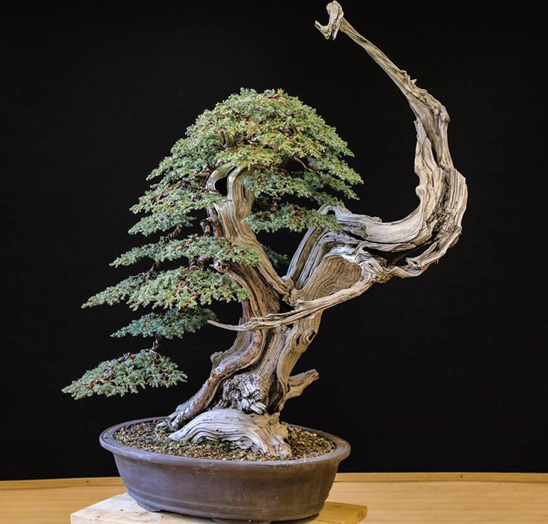 Bonsai Bark Promoting And Expanding The Bonsai Universe Page 5