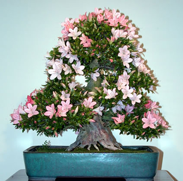 Celebrate Our Bonsai Museum Cast Your Vote Bonsai Bark