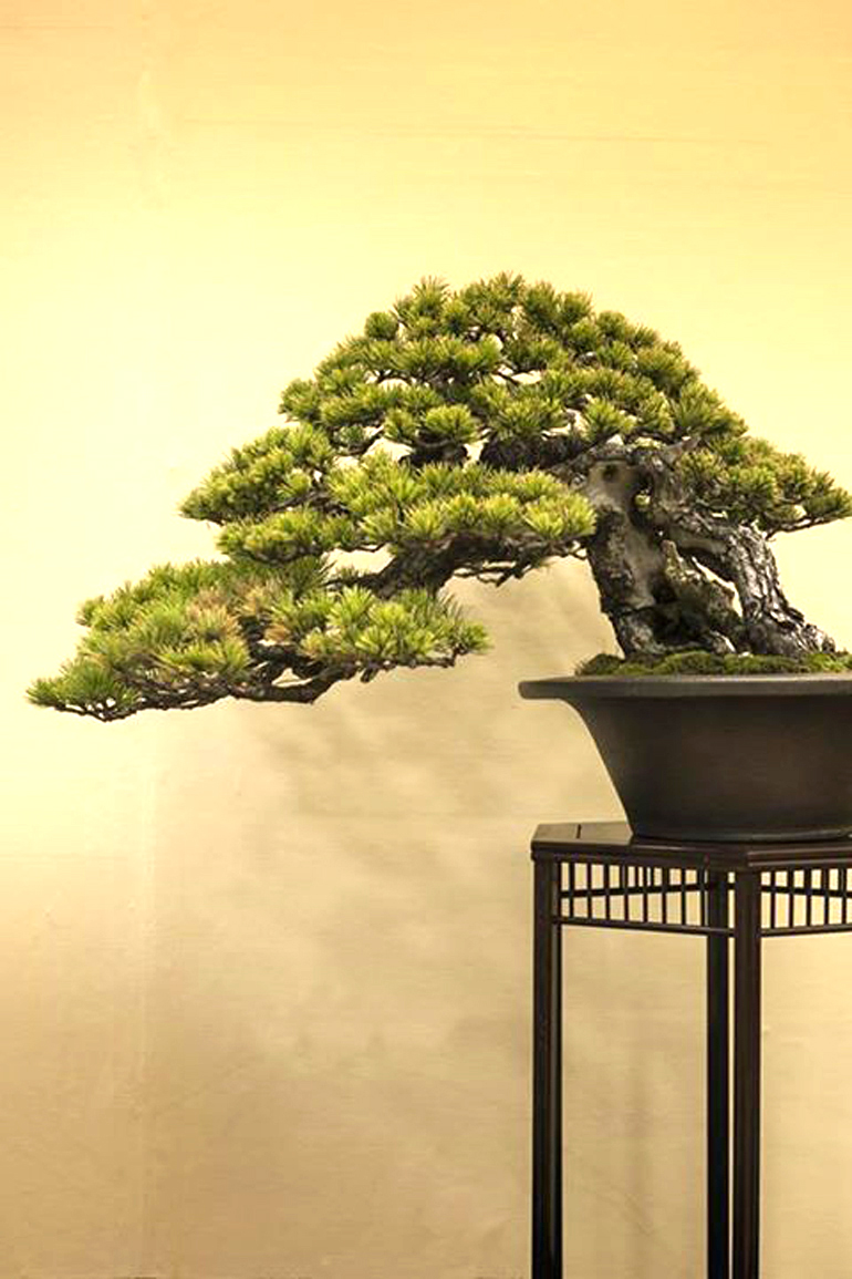 Bonsai Impressions Texture Movement Color Bark Wiring Lesson All The Photos Shown Here Are From Michael