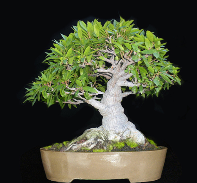 Useful Tips for Those of Us Stuck in Beginner Level Bonsai Skills
