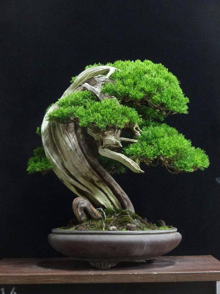 High Quality Hand Tools >> The Whole Bonsai Setup – Trees, Tools & Wire   Bonsai Bark