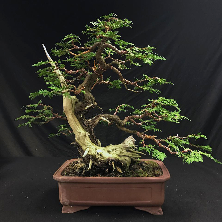 Admirable Wiring Cedar Bonsai Wiring Diagram Panel Wiring Digital Resources Funapmognl
