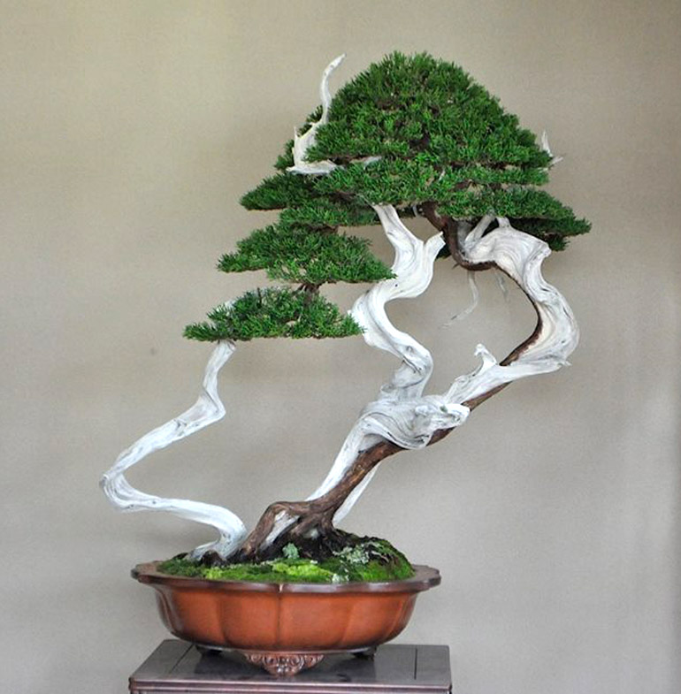 Bonsai Bark | Promoting and Expanding the Bonsai Universe | Page 52