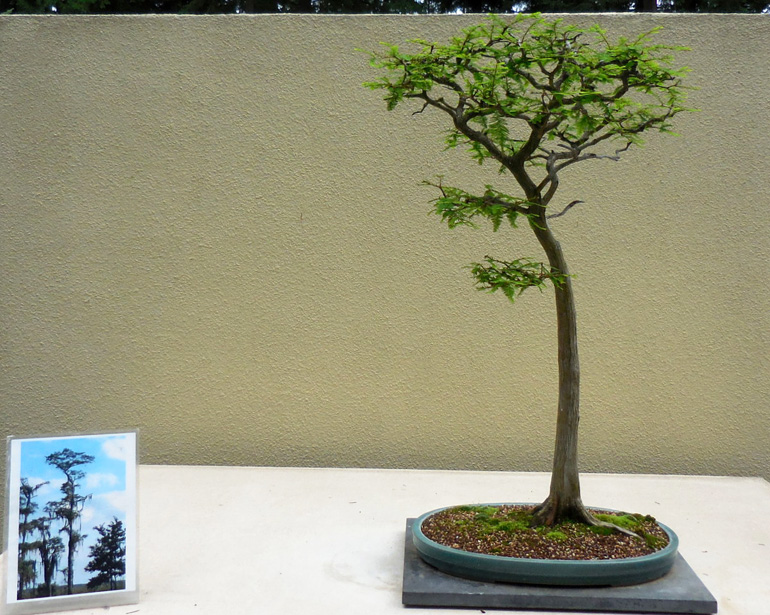 New Name New Curator Same Great Bonsai Collection