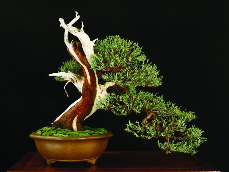 boon3sierra-juniper-3