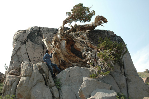 20579515100 in addition Night Milky Way And Star Trails in addition See Lake Tahoe besides Lake Tahoe Photo Guide Bonsai Rock as well 122. on bonsai rock tahoe