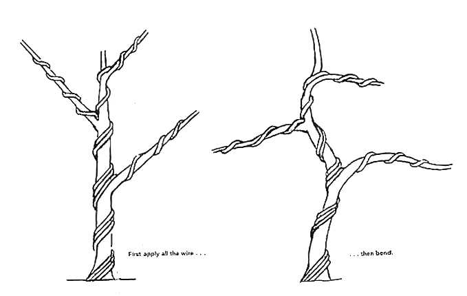 wire by the ton a simple lesson bonsai bark rh bonsaibark com Bonsai Shapes Bonsai Silhouette