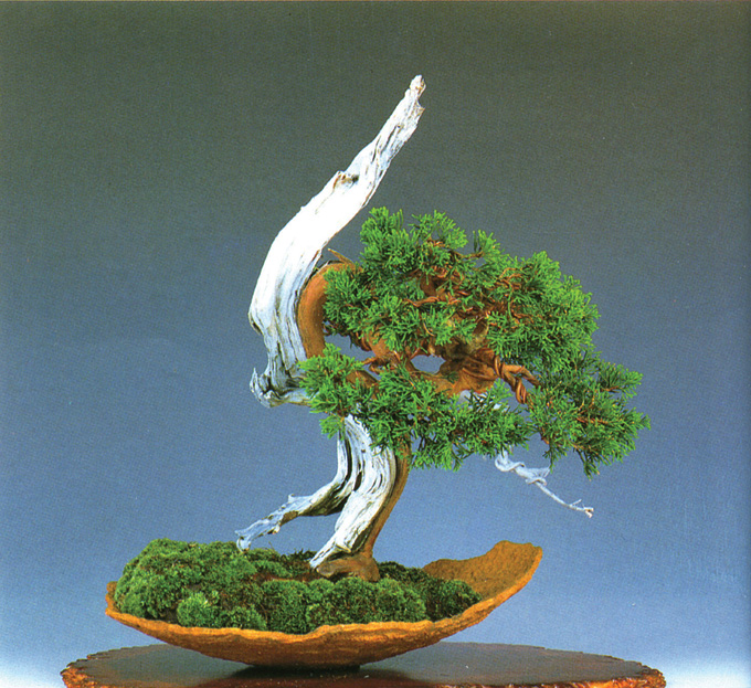 Astounding Bonsai Wire Your Choice Copper Or Aluminum Japanese Or Chinese Wiring Digital Resources Funapmognl