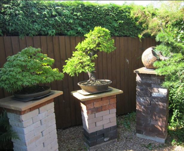 Backyard Bonsai 11 Bonsai Bark
