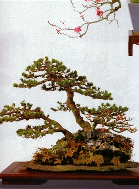 Gifts For Bonsai Lovers Bonsai Bark